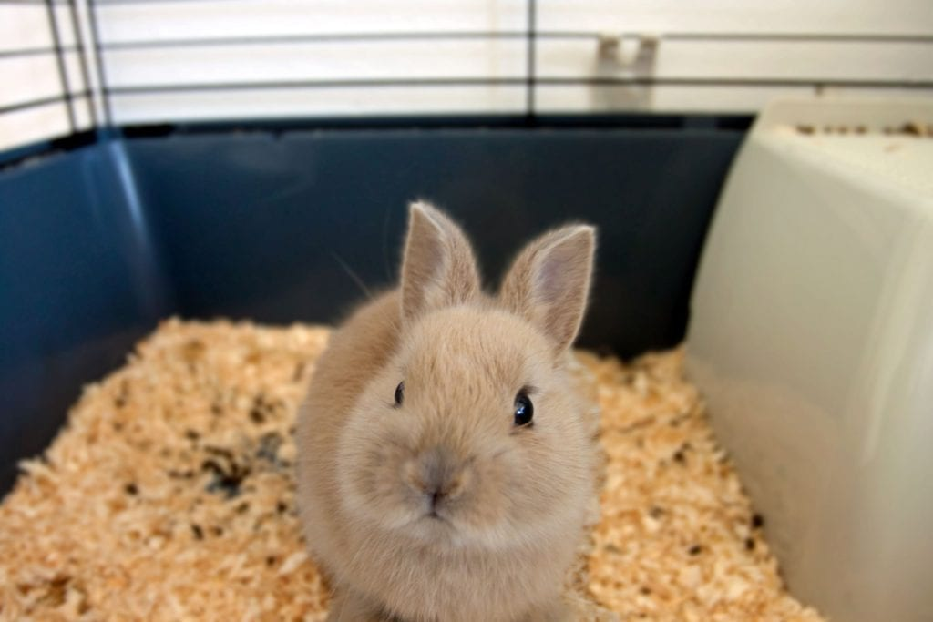 Is Newspaper Safe For A Rabbit Cage, Can Rabbits Have Red Cedar Bedding