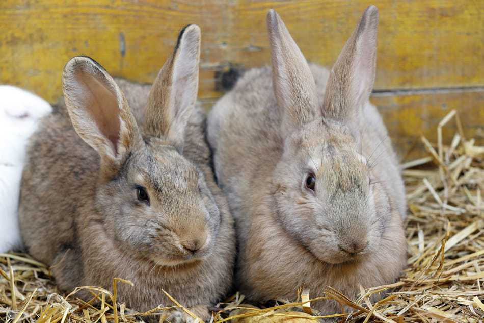 Picture of two rabbits side by side.