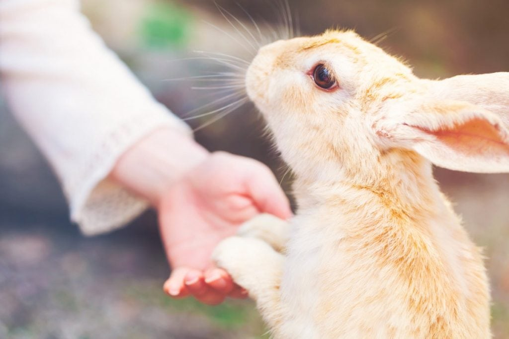 Cute bunny holds the hand of a woman.